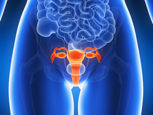 Image of female body showing reproductive organs