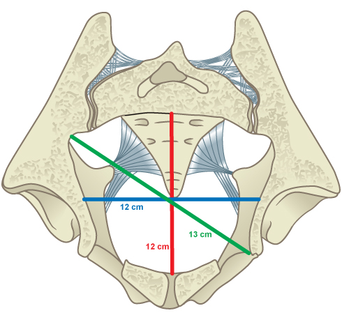 Illustrated image showing the midcavity.