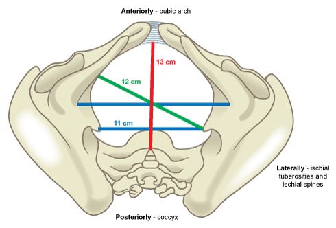 Image of pelvic dinemsions.