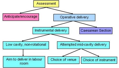 Illustrated image showing decision points flowchart.